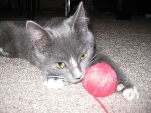 Tukie made me a pink ball of yarn.