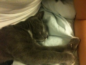 mochi_sleeping